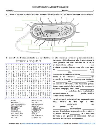 celulas procariotas origen y evolución