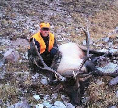 zuverink colorado elk