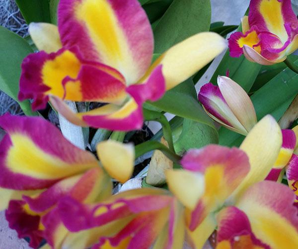 carnival-of-flowers-7