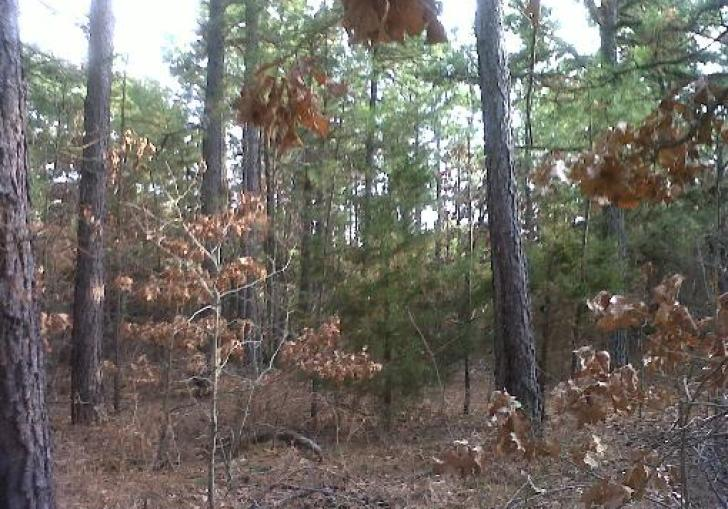 Hunting Leases In Oklahoma