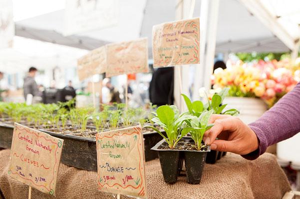 Farmers Market plants