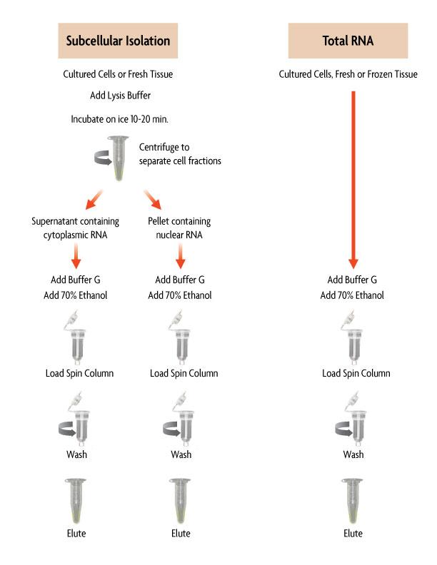 RNA isolation Kit