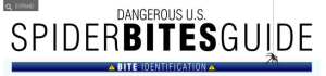 Identify Dangerous Spiders and Bite Symptoms with this Infographic 2014-11-07 10-38-19