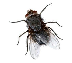fly-1-630x550