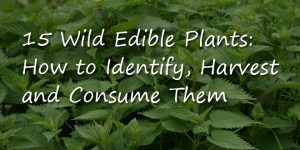 Wild-Edible-Plants-Logo-2