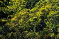 Rainforest Canopy Plants | www.pixshark.com - Images ...