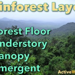 Amazon Rainforest Layers Diagram Venn Word Problems With 3 Circles Discover The Of A Facts Different And Animals That Live In Them