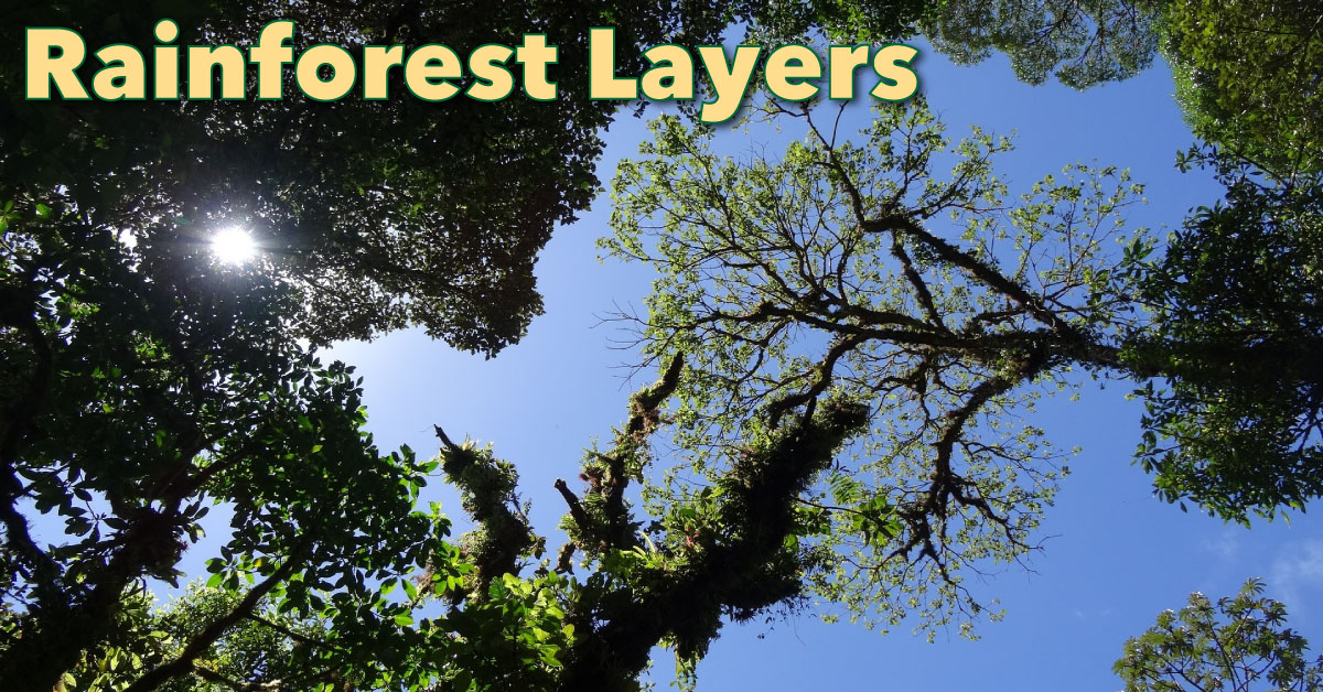 amazon rainforest layers diagram vauxhall corsa stereo wiring discover the of a facts pictures