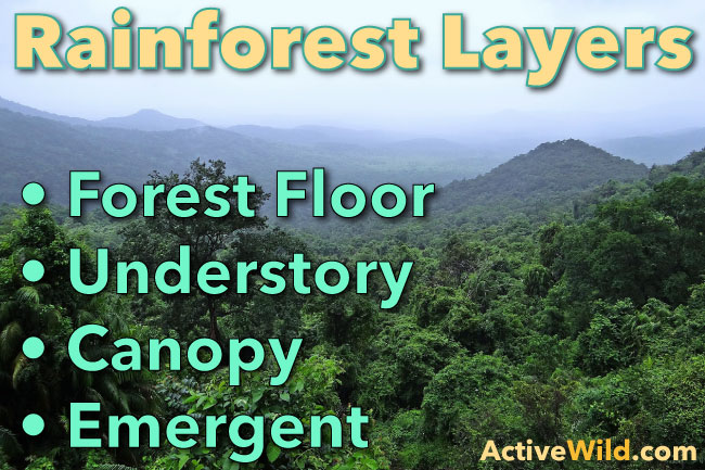 A wet season and a dry season. Rainforest Layers Discover The Layers Of A Rainforest Facts Pictures