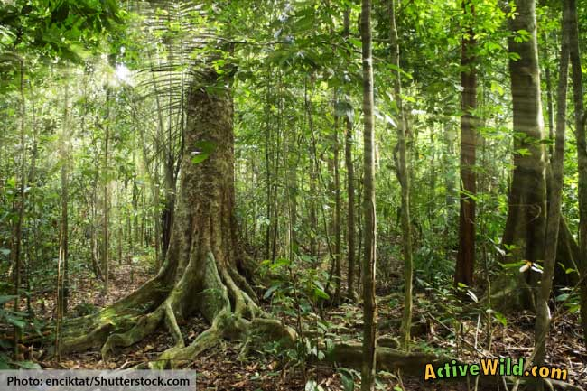 It's home to 40,000 classified plant species—some of which are known cures for the things that ail us. What Is A Tropical Rainforest Definition Location Pictures And Facts