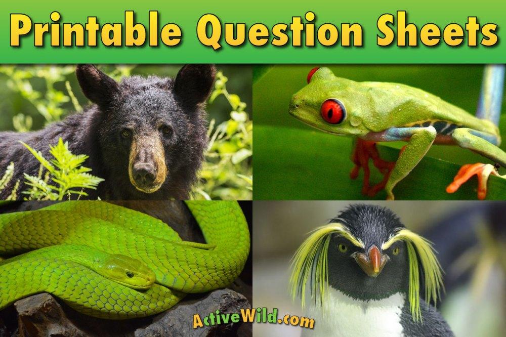 medium resolution of Free Printable Worksheets For Teachers \u0026 Parents - Wildlife And Science