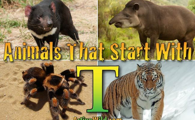 Animals That Start With T List Of Amazing Animals Beginning With T