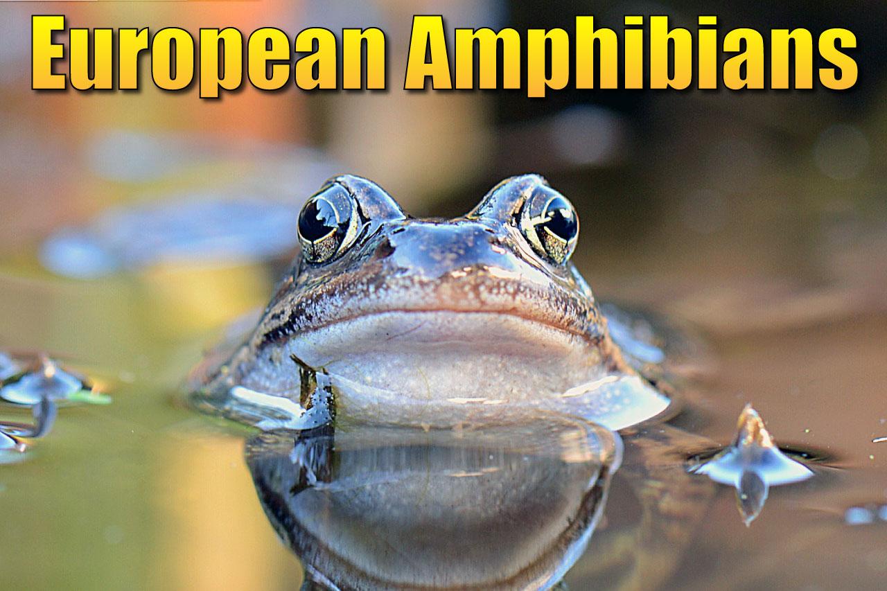Amphibians Of Europe A List Of Amazing European