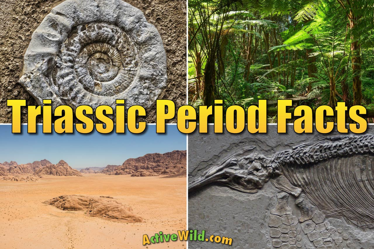 The Triassic Period Facts For Kids Amp Adults Animals