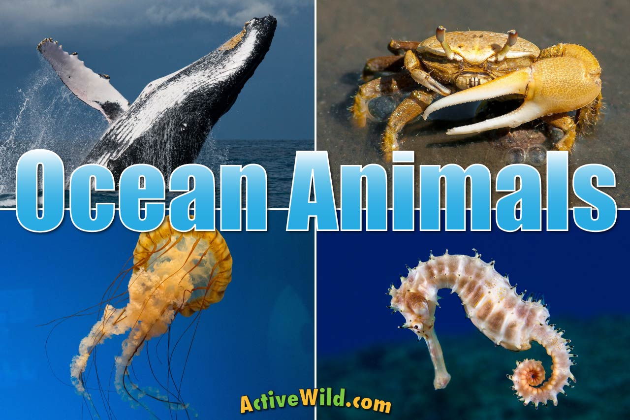 Ocean Animals For Kids Amp Adults List Of Animals That Live