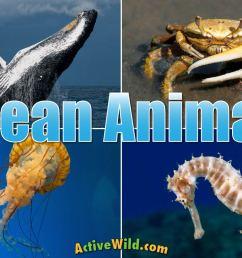 Ocean Animals For Kids \u0026 Adults: List Of Animals That Live In The Ocean [ 853 x 1280 Pixel ]