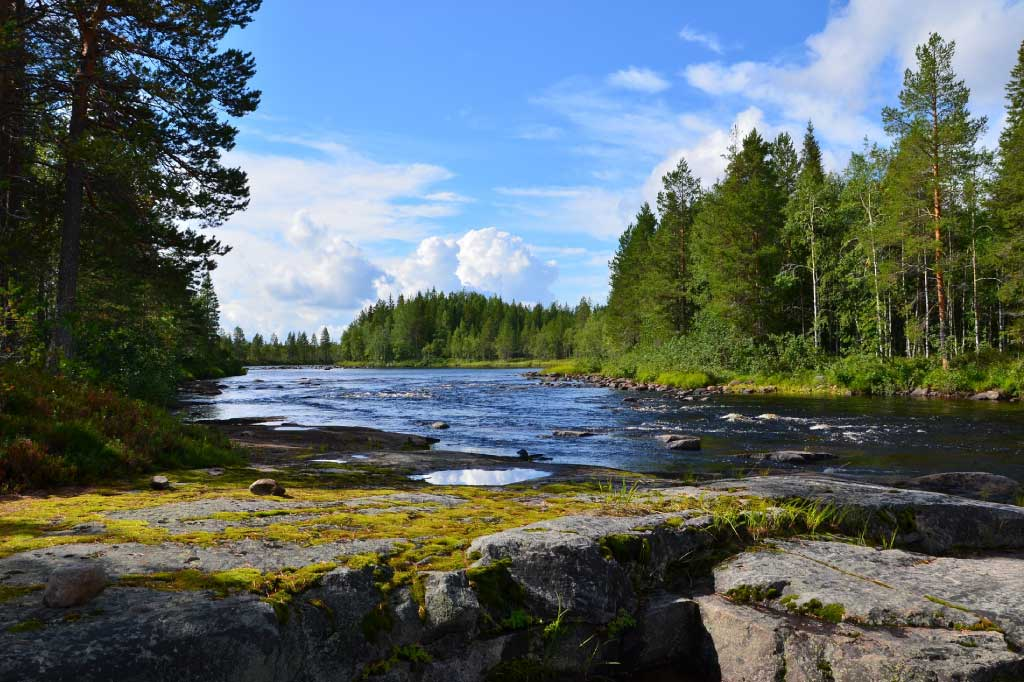 In fact, t emperatures in the boreal have increased at twice the global rate in the past 100 years. What Is The Taiga Biome Discover Animals Plants Of The Boreal Forest