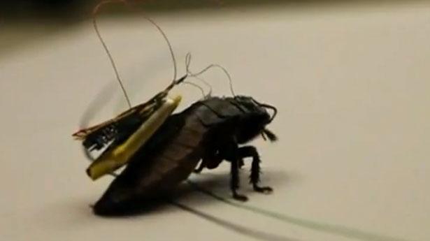https://i0.wp.com/www.activistpost.com/wp-content/uploads/2013/10/Cyborg-cockroach-screenshot1.jpg
