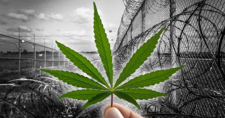 prison-cannabis