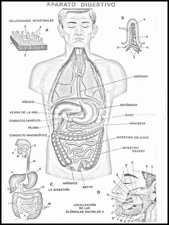 Printable Worksheets For Kids The Human Body To Learn
