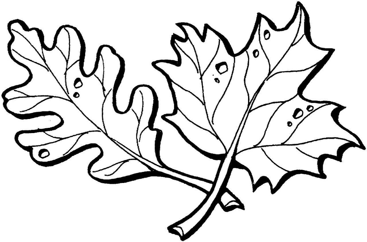 Leaf Coloring Pages For Preschool
