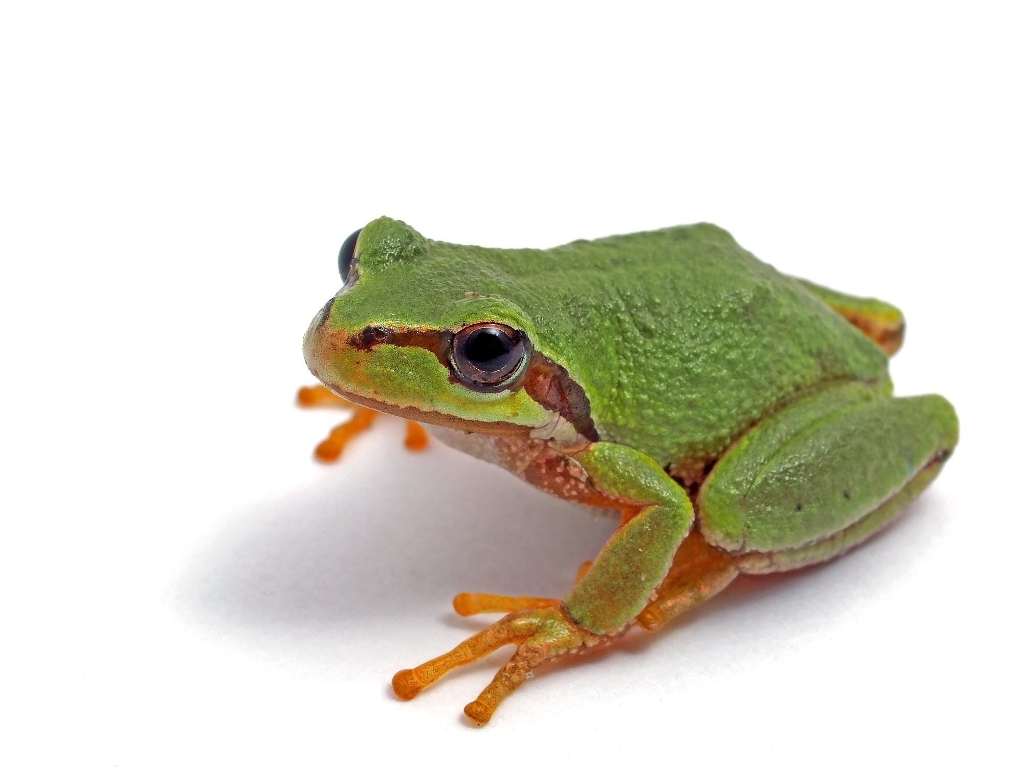 Free Pictures Of Amphibians