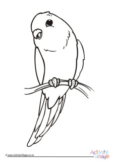 Budgie Worksheets