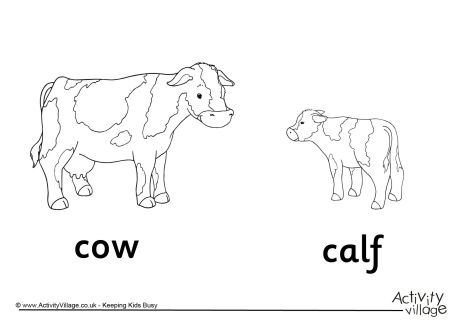 Cow and Calf Colouring Page