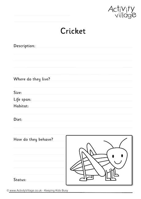 Cricket Worksheet