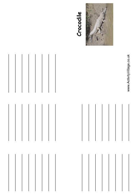 Crocodile Mini Booklets