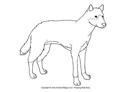 Dingo Colouring Page