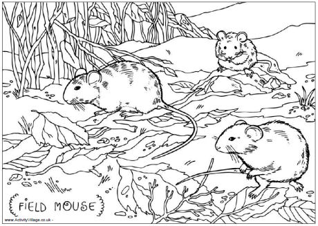 Field Mouse Colouring Page For Kids