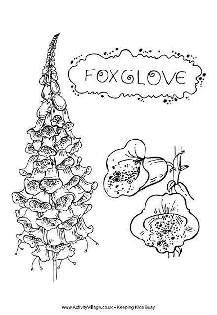 Foxglove Colouring Page