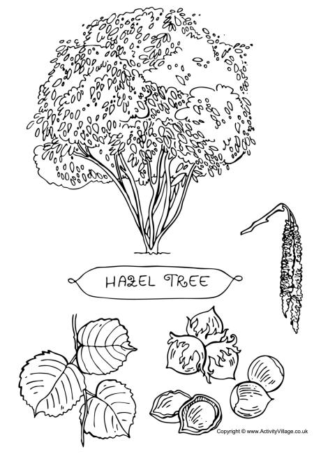 Hazel Tree Colouring Page