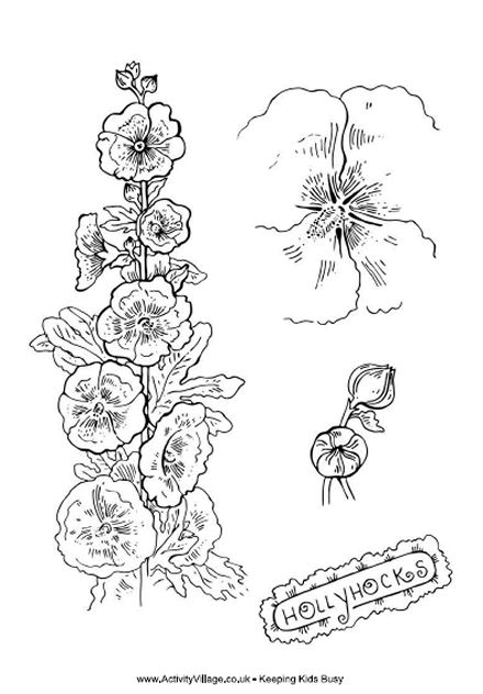 Hollyhocks Colouring Page
