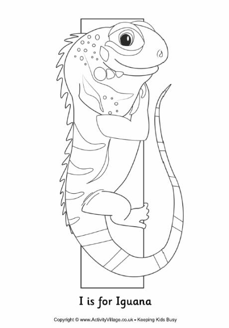 I Is For Iguana Page Coloring Pages