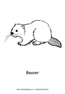Beaver Printables