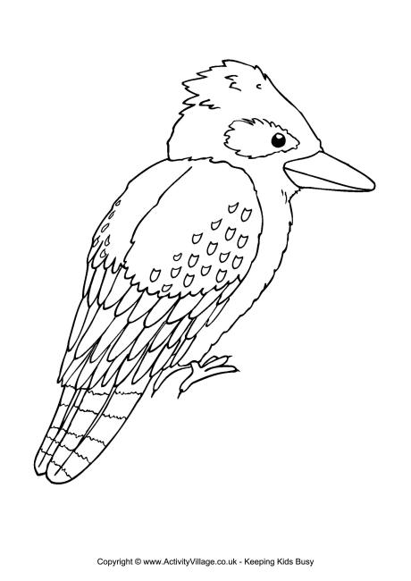 Kookaburra Colouring Page