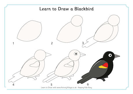 Learn to Draw a Blackbird