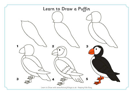 Learn to Draw a Puffin