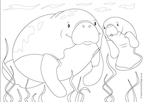 Manatees Scene Colouring Page