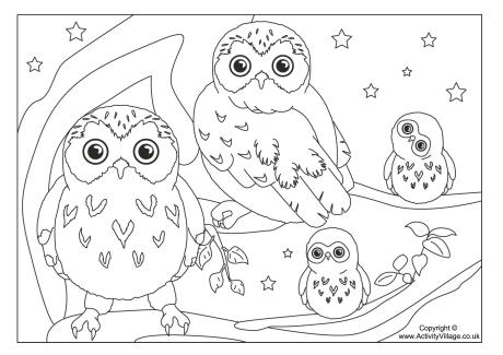 Owl Colouring Page 3