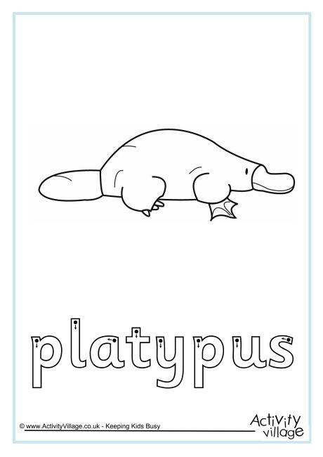 Platypus Finger Tracing