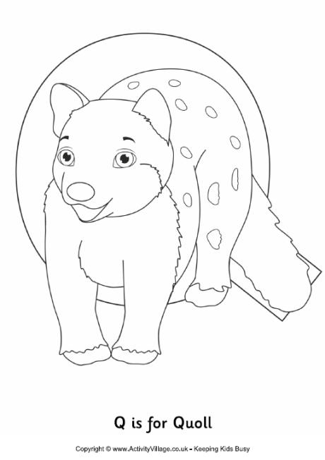 Q is for Quoll Colouring Page