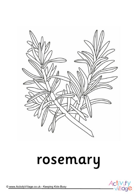 Rosemary Colouring page