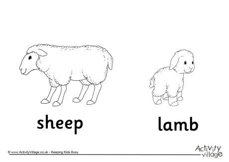 Sheep and Lamb Colouring Page