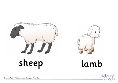 Sheep and Lamb Poster