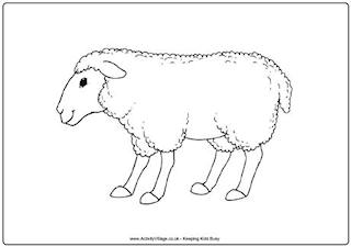 New Zealand Colouring Pages