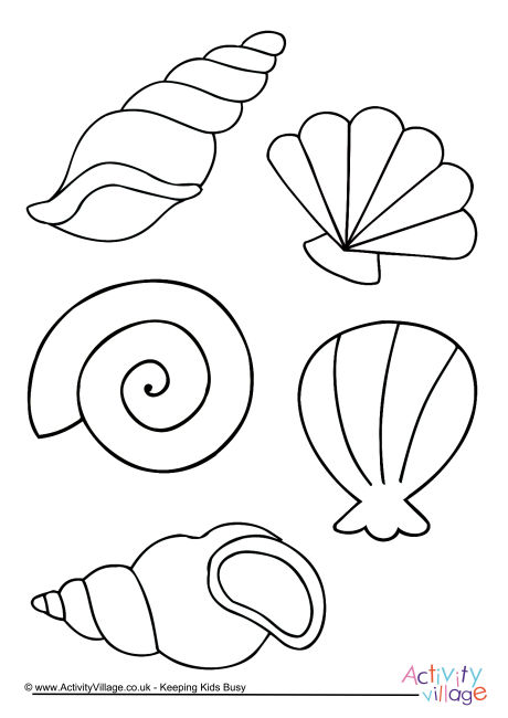 Shell Colouring Page