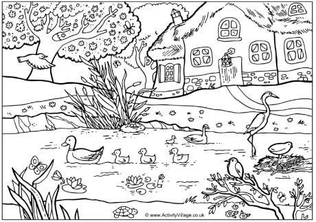 Spring Pond Colouring Page